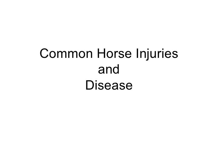Common Horse Injuries       and     Disease