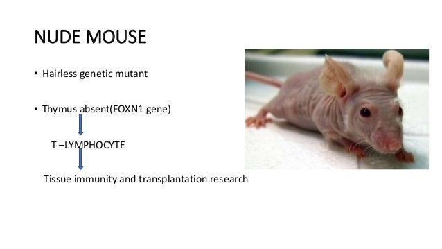 Common laboratory animals