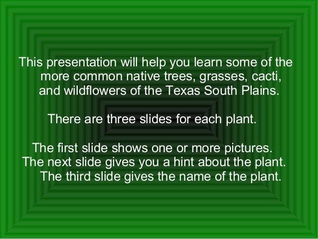 Common native plants of the south plains Slide 2