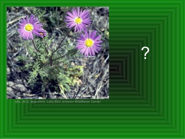 Common native plants of the south plains Slide 3