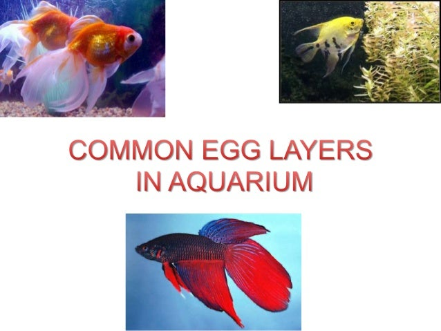 INTRODUCTION Barbs are the most important group among egg layers and most species of them are known originated from India...