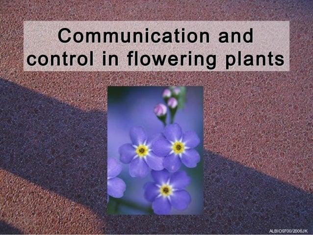 Communication andcontrol in flowering plants                         ALBIO9700/2006JK