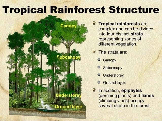 Community Ecology & Conservation Group Website