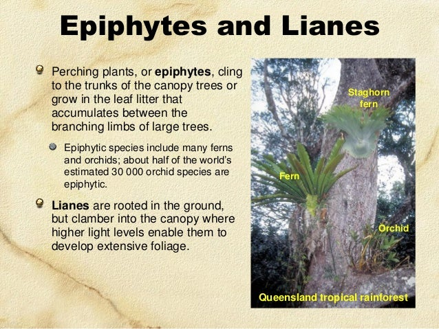 physiological adaptations of epiphytes