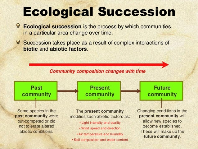 Communities – Ecological Succession Worksheet Answers