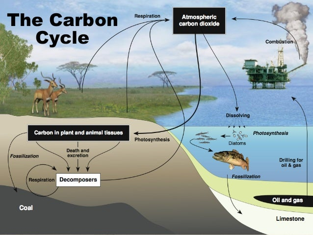 The Carbon Cycle Worksheet Answers Biozone Geotwitter Kids Activities