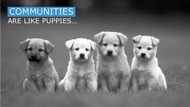 1 ARE LIKE PUPPIES… COMMUNITIESCOMMUNITIES