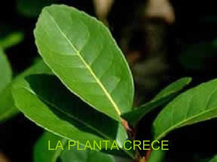 LA PLANTA CRECE