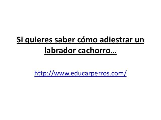 Si quieres saber cómo adiestrar un        labrador cachorro…    http://www.educarperros.com/