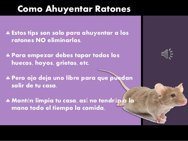 Como ahuyentar ratones - Como sacar las moscas de la casa ...