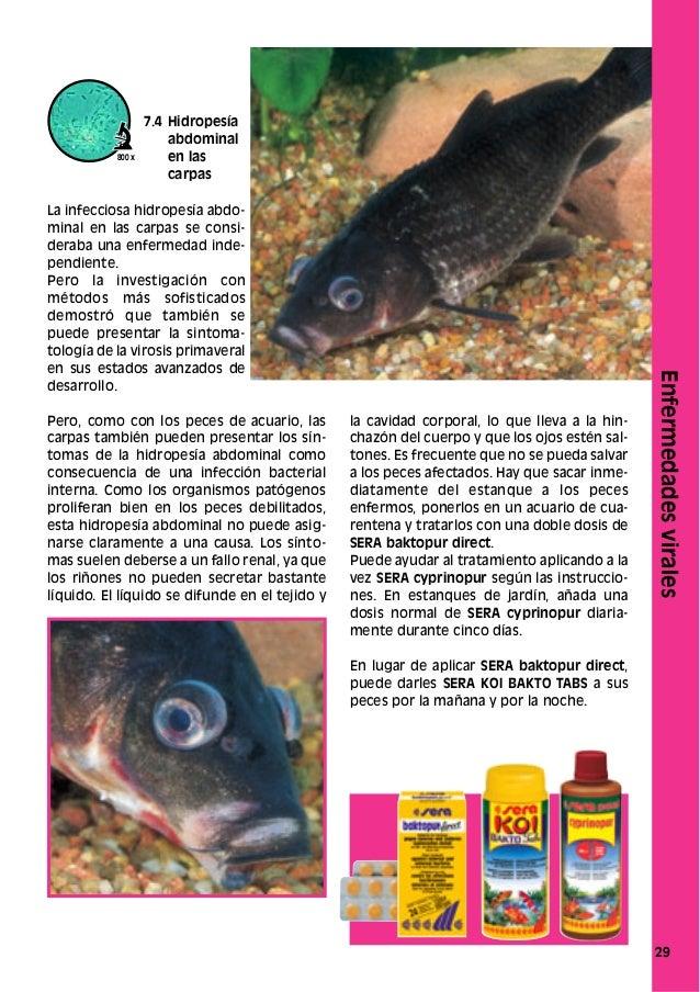 Como cuidar de manera sana a sus peces ornamentales for Como cuidar peces de agua fria