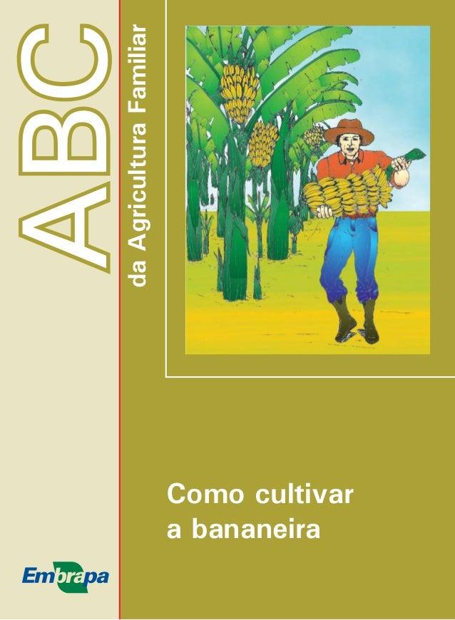 ABC  da Agricultura Familiar  Como cultivar  a bananeira