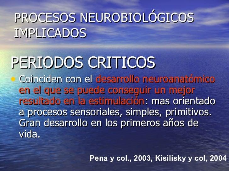 PROCESOS NEUROBIOLÓGICOS IMPLICADOS <ul><li>PERIODOS CRITICOS </li></ul><ul><li>Coinciden con el  desarrollo neuroanatómic...