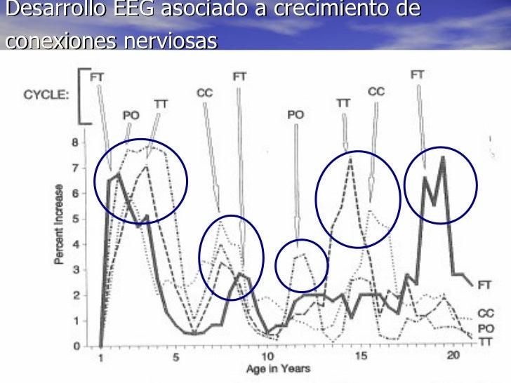 Desarrollo EEG asociado a crecimiento de conexiones nerviosas