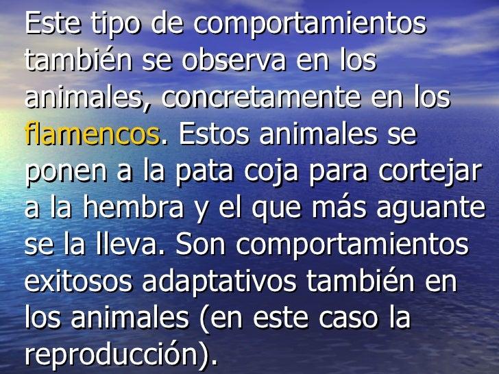 <ul><li>Este tipo de comportamientos también se observa en los animales, concretamente en los  flamencos . Estos animales ...