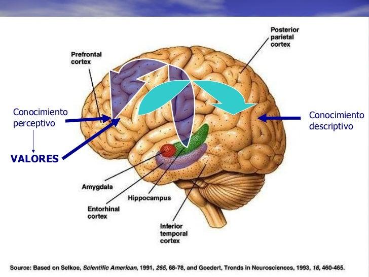 Conocimiento  perceptivo Conocimiento  descriptivo VALORES