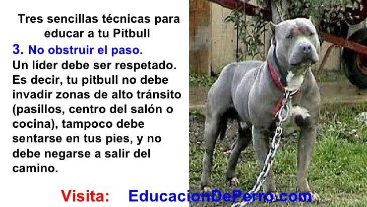 Como educar a un perro pitbull - Como banar a un perro ...