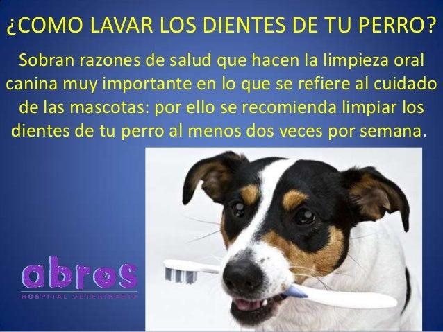 ¿COMO LAVAR LOS DIENTES DE TU PERRO? Sobran razones de salud que hacen la limpieza oral canina muy importante en lo que se...