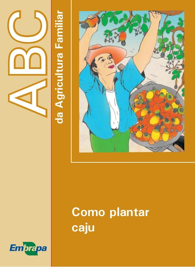 ABC  da Agricultura Familiar  Como plantar  caju