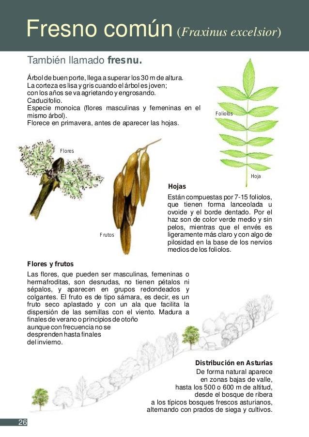 Como plantar un rbol for Como se desarrolla un arbol