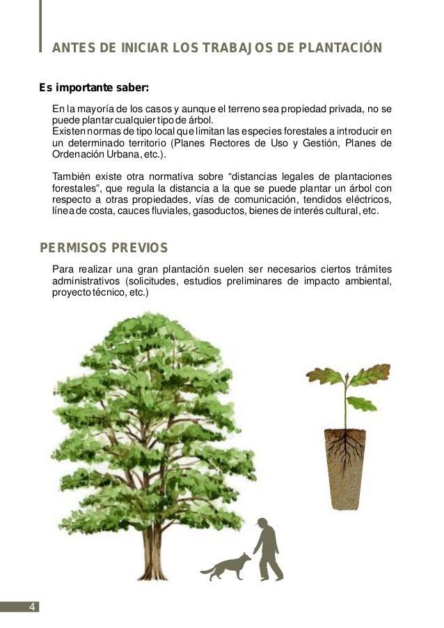 Como plantar un rbol for Cuanto mide un arbol