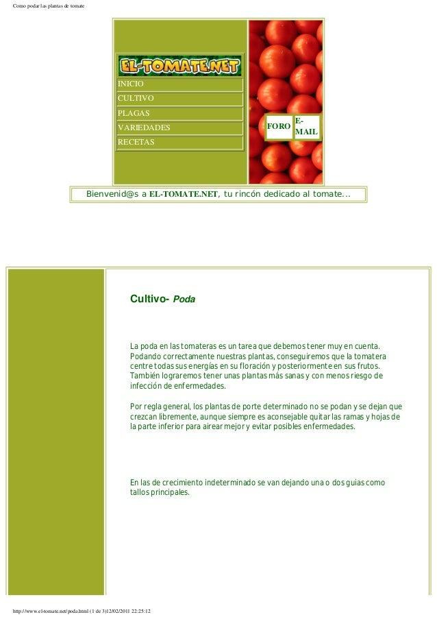 Como podar las plantas de tomate                                               INICIO                                     ...