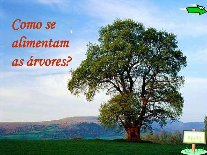 Como sealimentamas árvores?              Ajuda