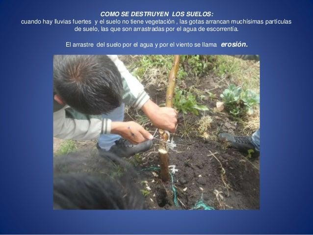 COMO SE DESTRUYEN LOS SUELOS:  cuando hay lluvias fuertes y el suelo no tiene vegetación , las gotas arrancan muchísimas p...