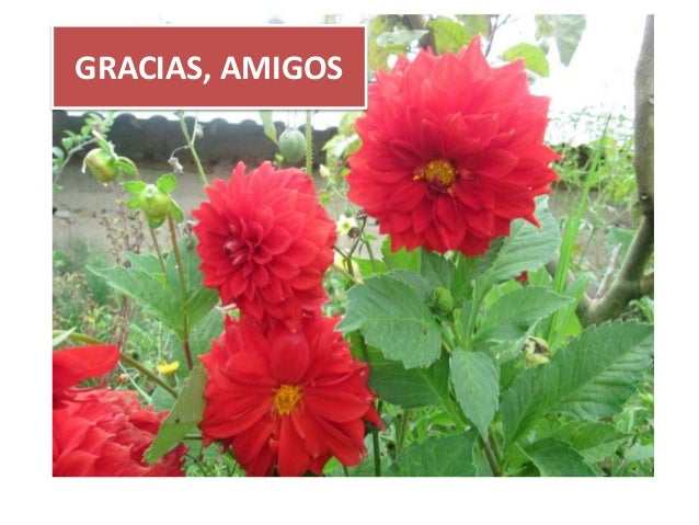 GRACIAS, AMIGOS