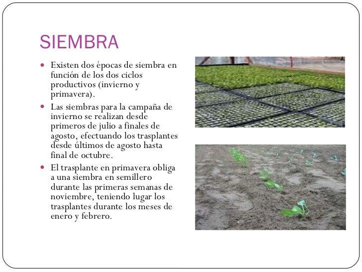Como sembrar hortalizas for Como cultivar hortalizas
