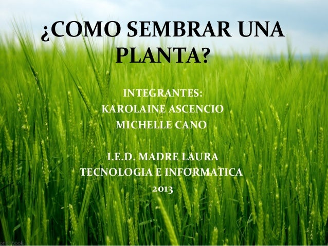 Como sembrar una planta for Como cultivar plantas ornamentales