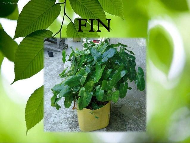 como sembrar una planta