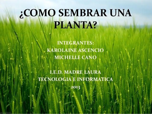 Como sembrar una planta for Como sembrar plantas ornamentales