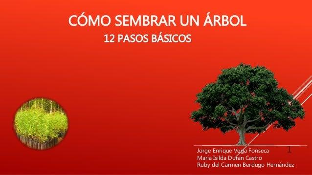 CÓMO SEMBRAR UN ÁRBOL 12 PASOS BÁSICOS 1Jorge Enrique Vega Fonseca María Isilda Duran Castro Ruby del Carmen Berdugo Herná...