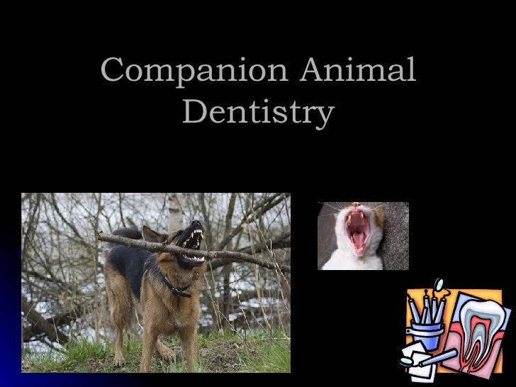 Companion Animal Dentistry