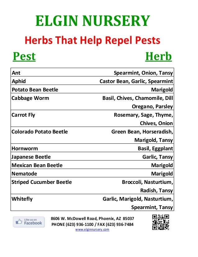 ELGINNURSERY  HerbsThatHelpRepelPestsPest                      Herb               Ant                               ...