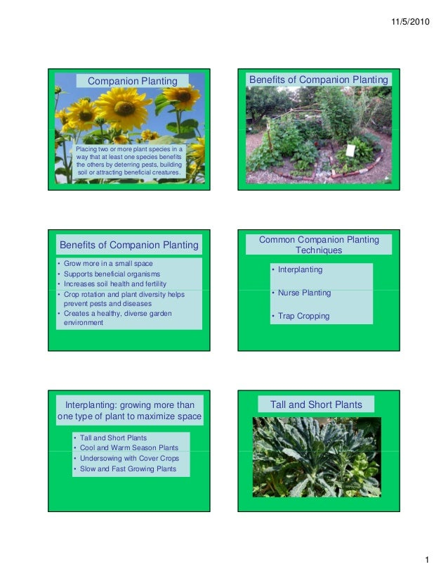 11/5/2010           Companion Planting                    Benefits of Companion Planting     Placing two or more plant spe...