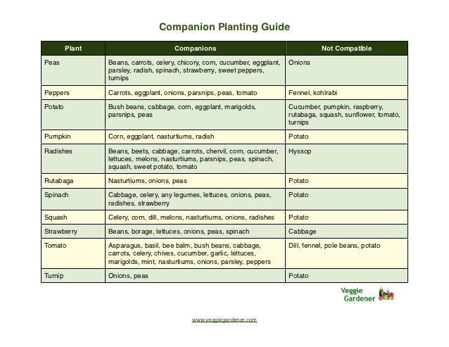 Gardening Planting Calendar Raised Bed Vegetable Garden Has