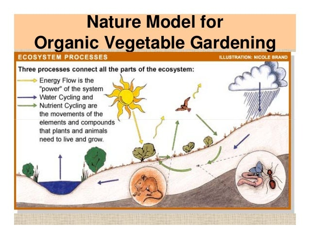 Companion Planting Practices and Organic Vegetable Gardening Saraso