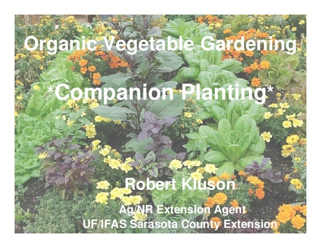 Companion Planting Practices And Organic Vegetable