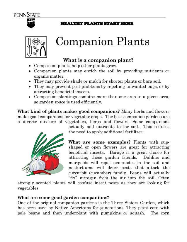 HEALTHY PLANTS START HERE                  Companion Plants                     What is a companion plant?     • Companion...