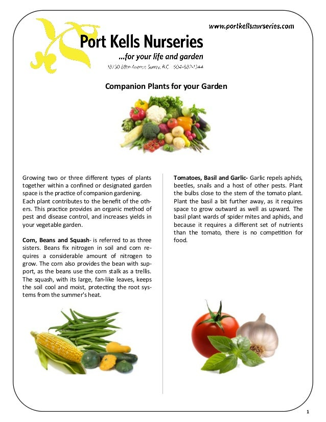 Companion Plants for your GardenGrowing two or three different types of plants        Tomatoes, Basil and Garlic- Garlic r...