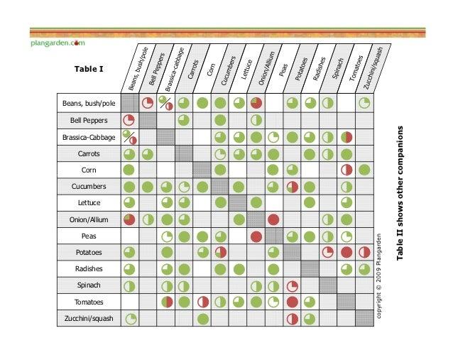 Comparison of Companion Planting Guides for Most Common Garden Vegeta – Garden Companion Planting