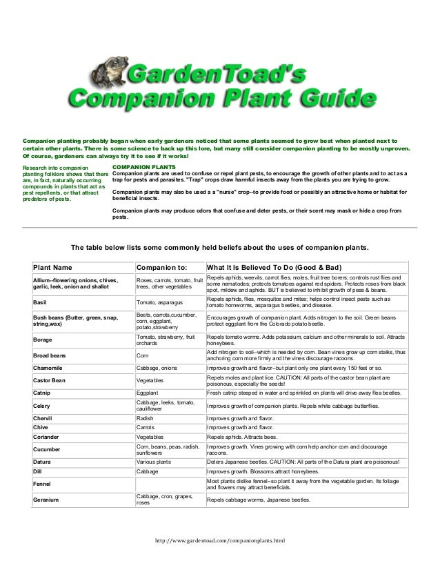 Companion planting probably began when early gardeners noticed that some plants seemed to grow best when planted next toce...