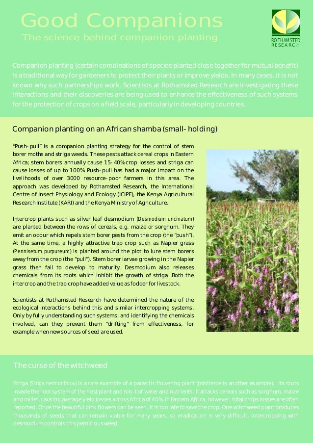 Good Companions   The science behind companion planting                                                                   ...