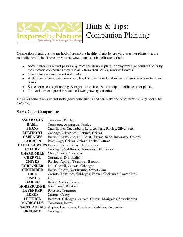 Hints & Tips:                                               Companion PlantingCompanion planting is the method of promotin...