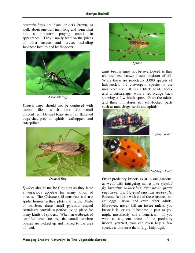 Managing Insects Naturally In The Vegetable Garden 3; 4.