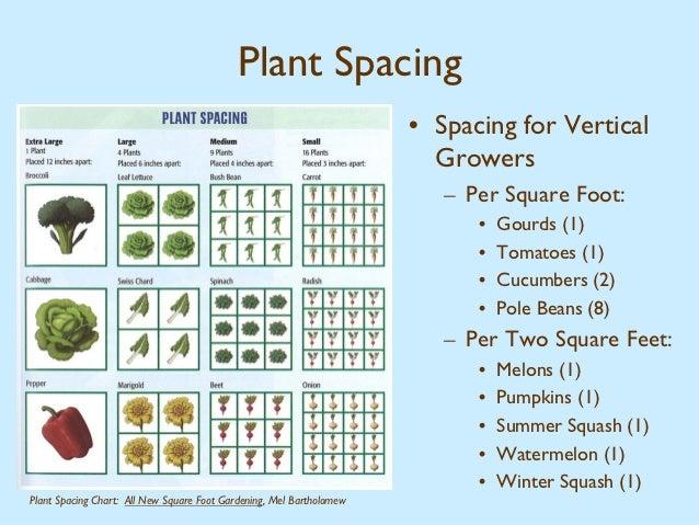 Plant ...