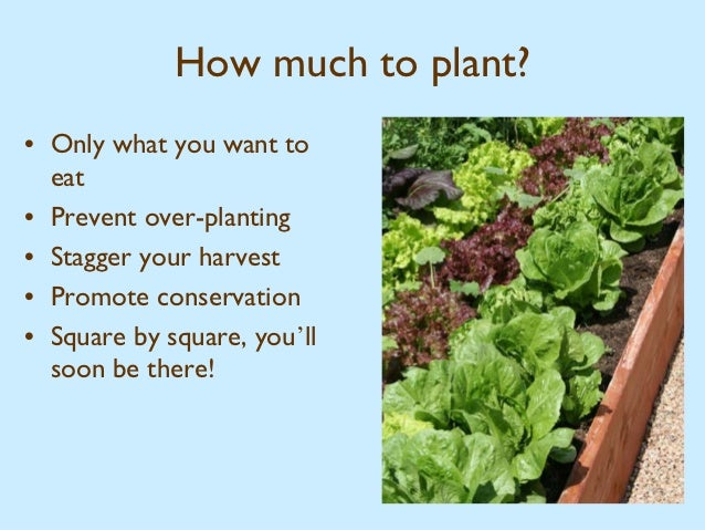 How much to plant. Square Foot Gardening   Harvest Farm Community Garden