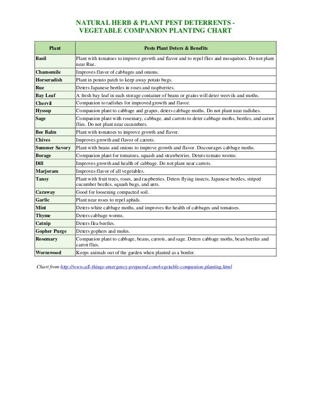 Vegetable Companion Planting Chart - Theculvers Slide 3